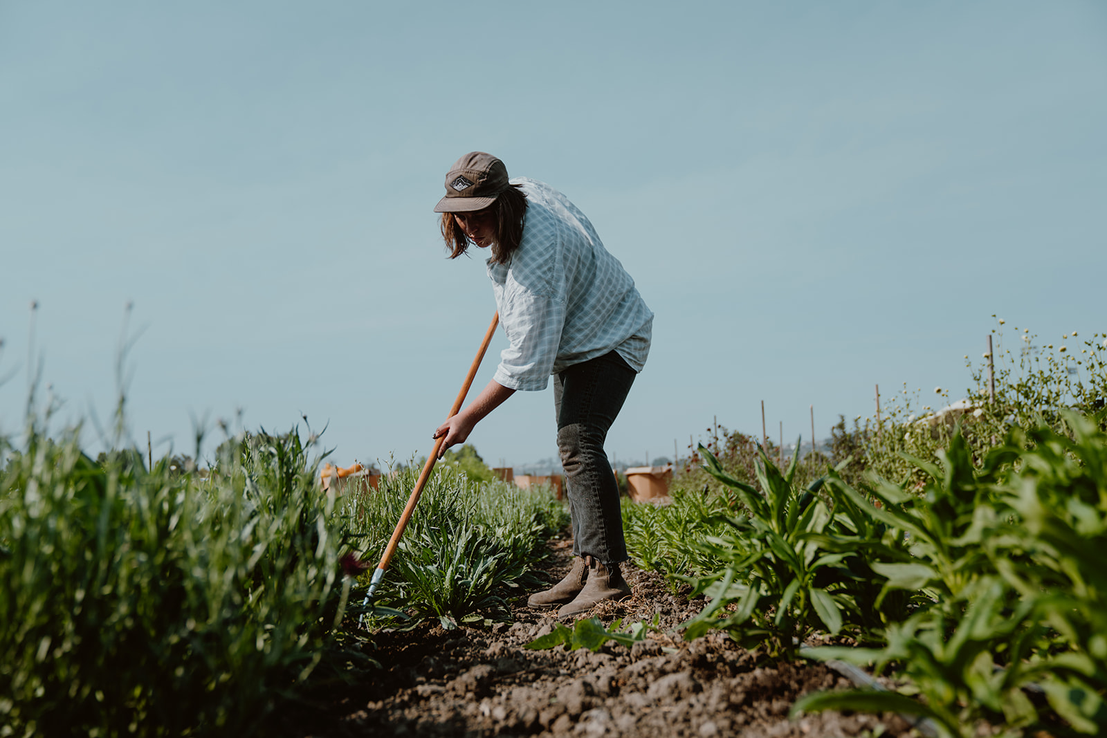 Tending to the soil in the field