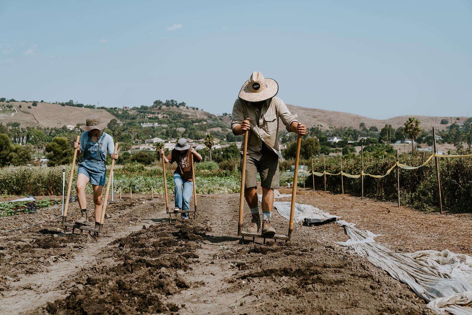 Farmers tilling the fields.