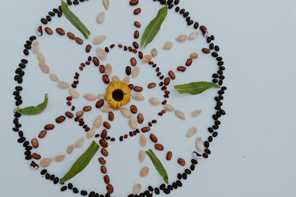 Seeds arranged in a mandala on white.