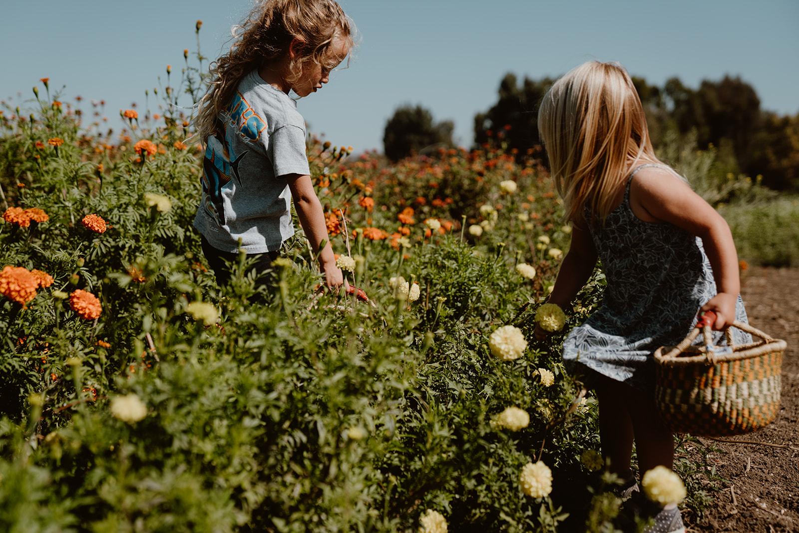Children picking flowers in field.