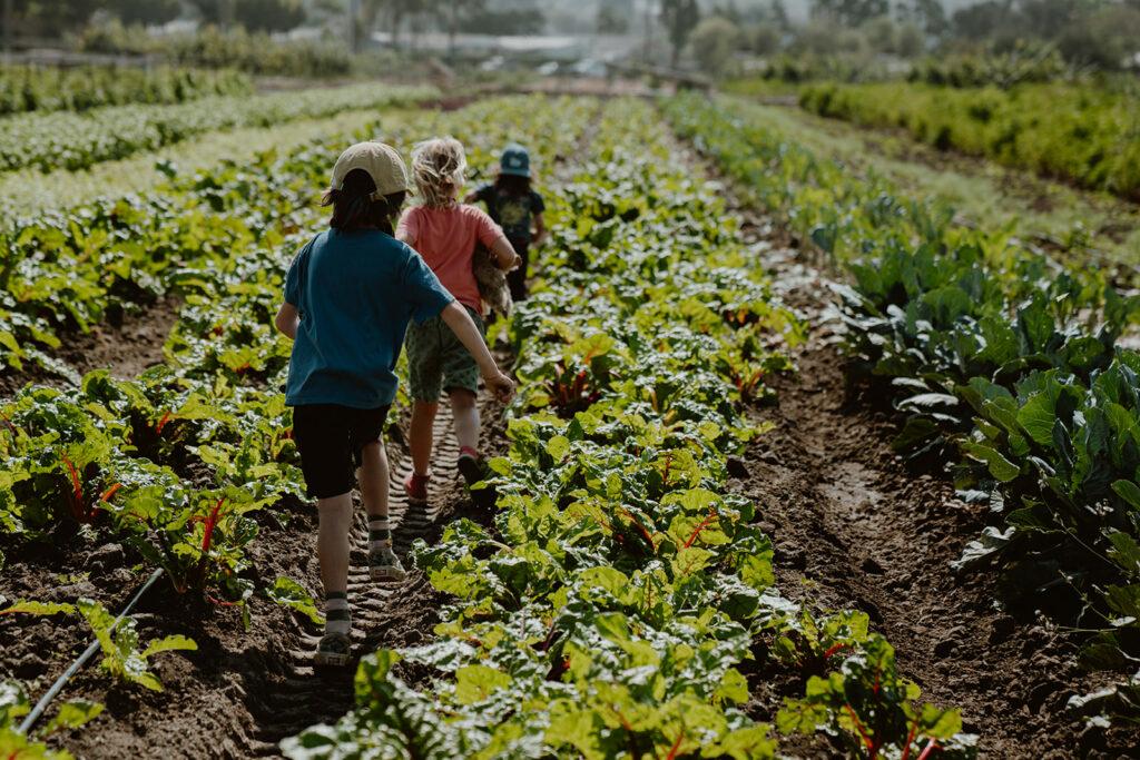 Children walking through farm fields.