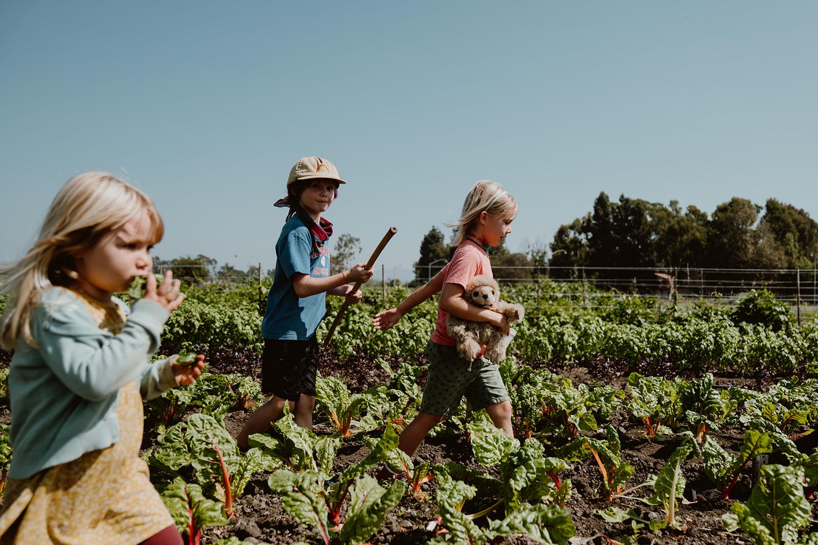Children walking through field