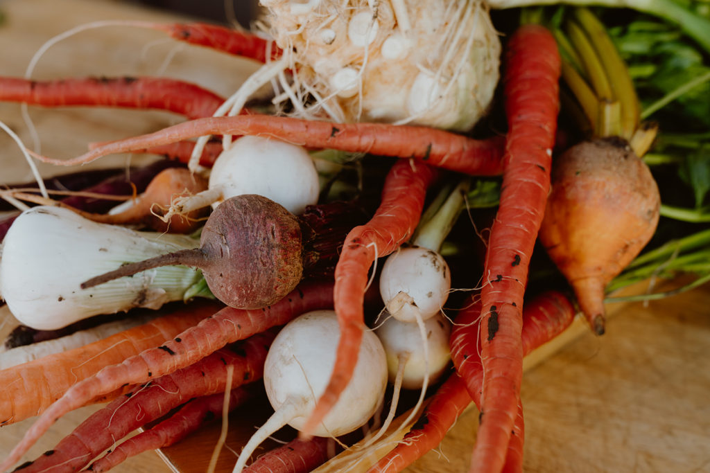 Multiple varieties of roots, carrots, beets, and turnips.