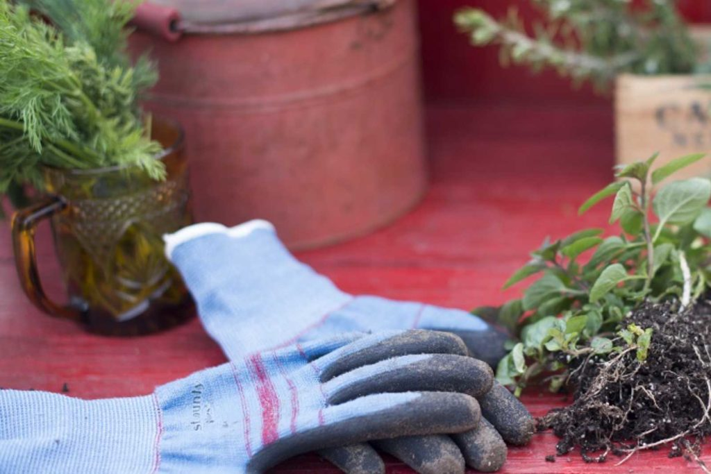 Blue gardening gloves resting on a barn red wood with associated herbs.
