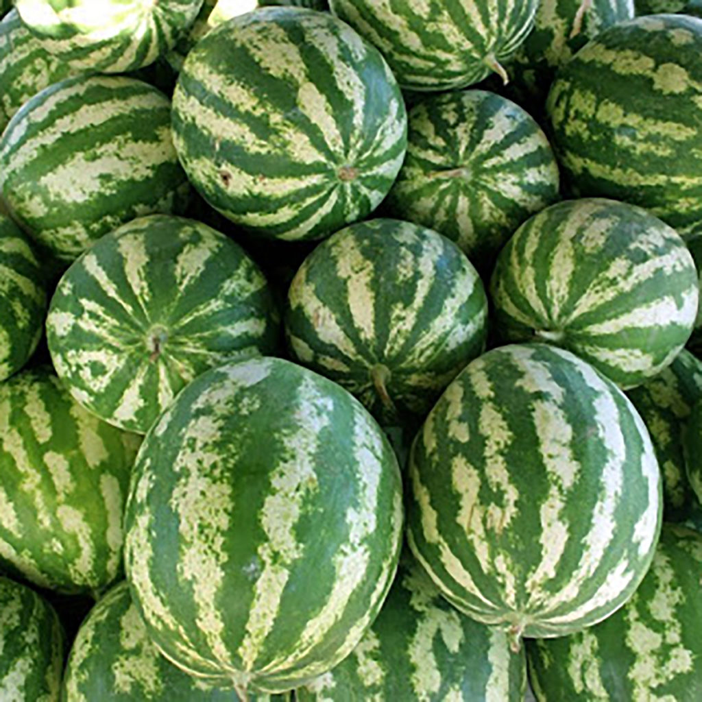 Group of watermelon