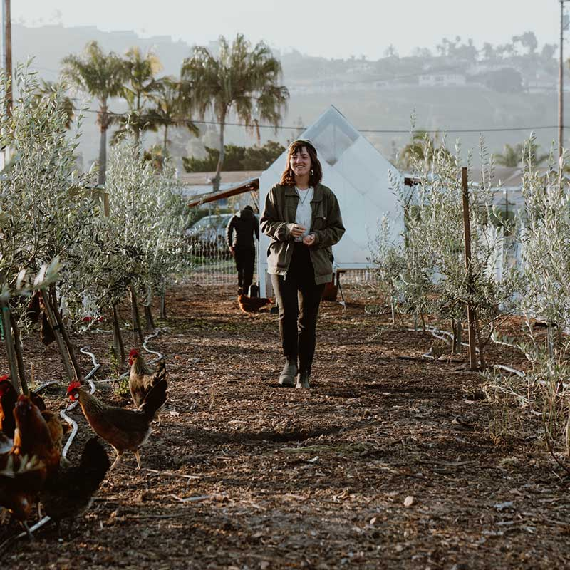 Woman walks through rows of trees with chickens in the foreground.