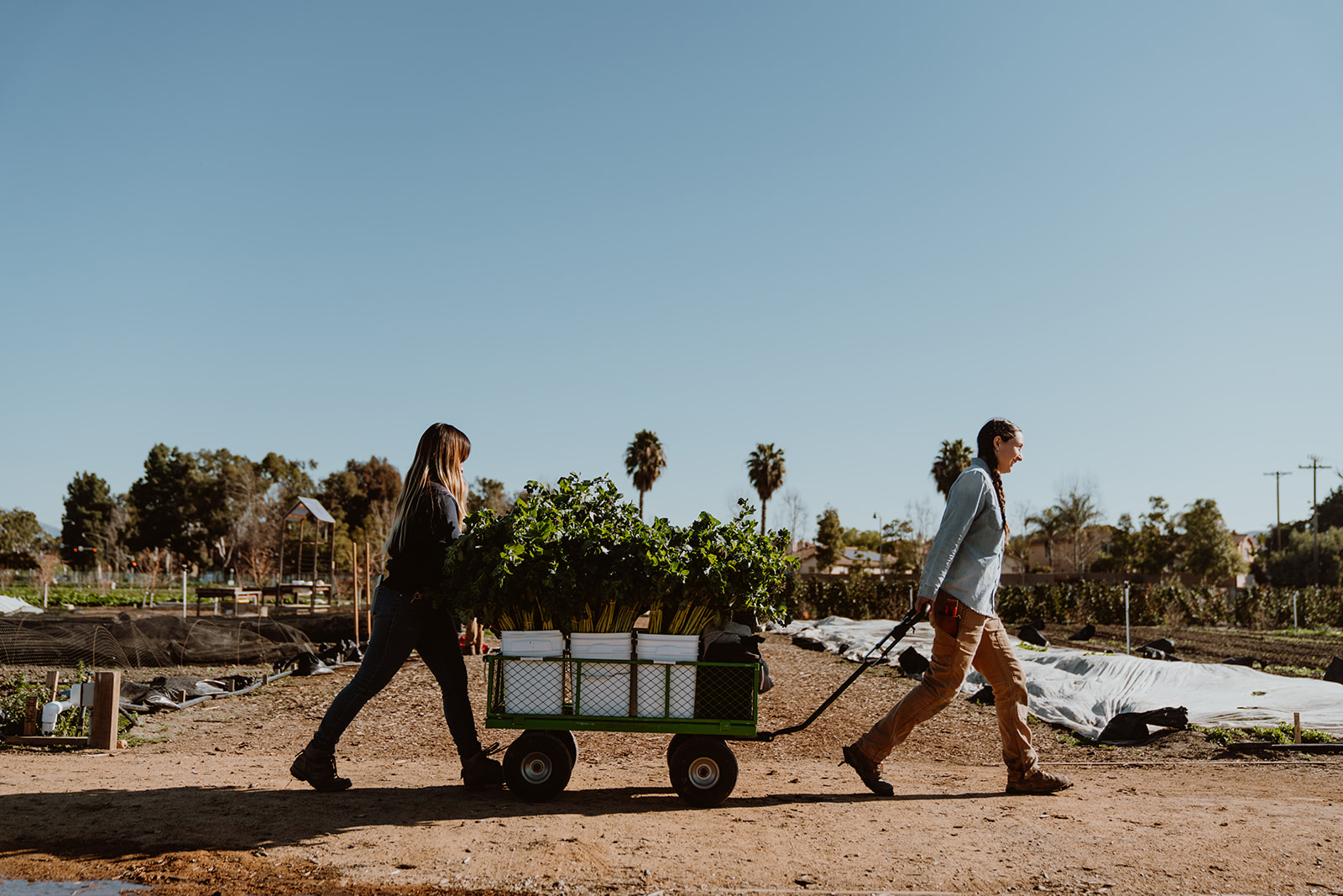 Farm workers walking through fields with cart.