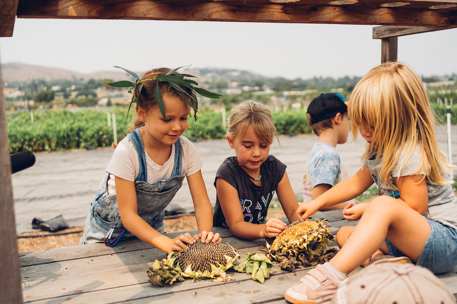 Group of young children handling sunflower seeds.