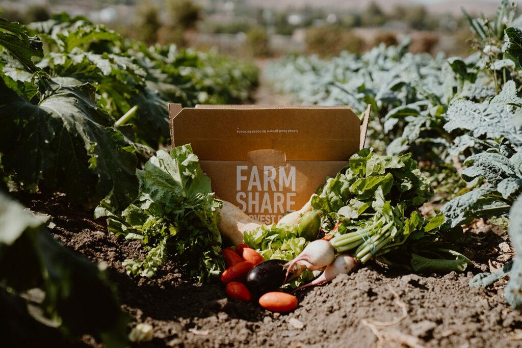 Produce in midlle of row in farm field.