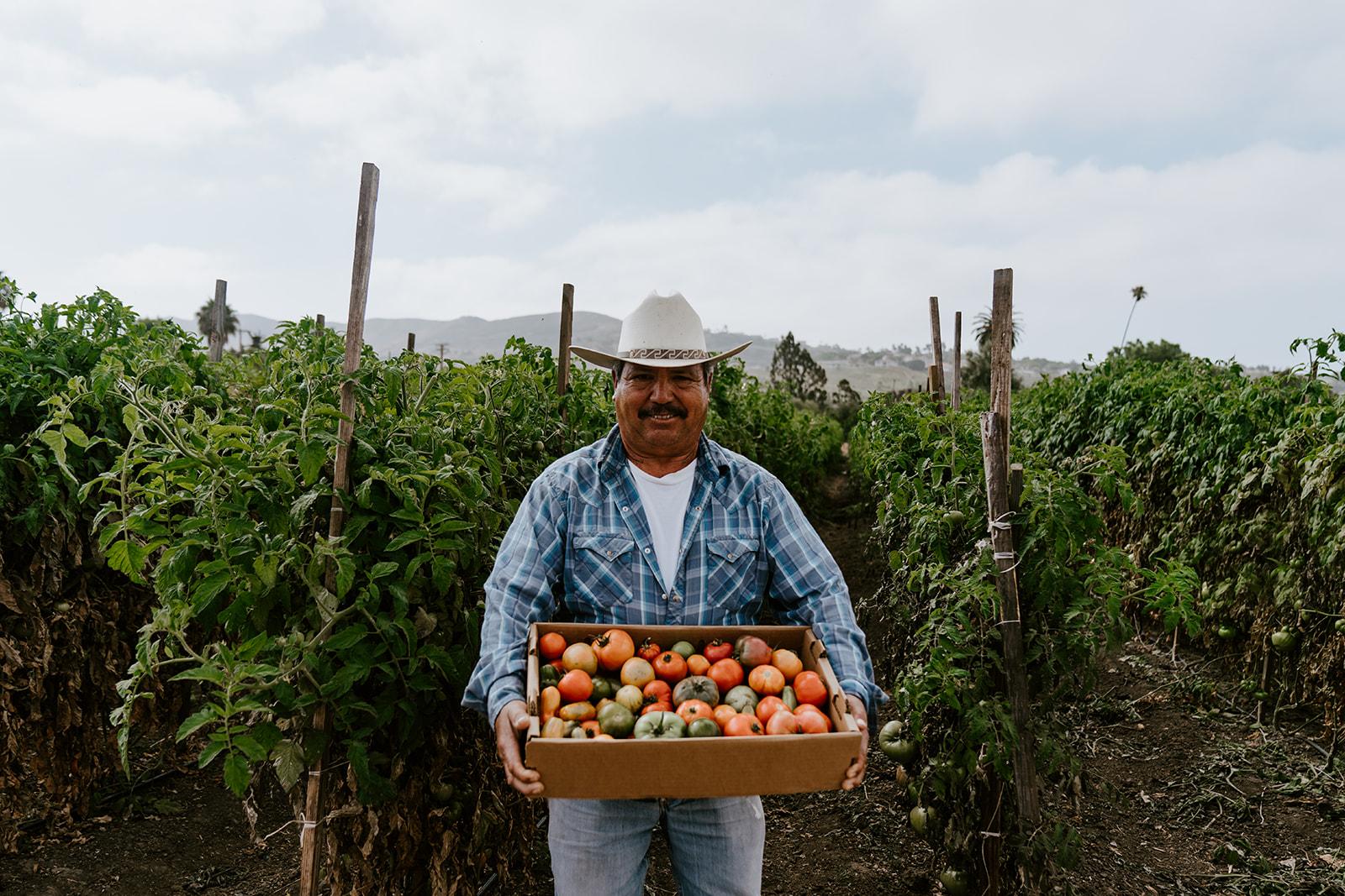 Farmer holding box of tomatoes.