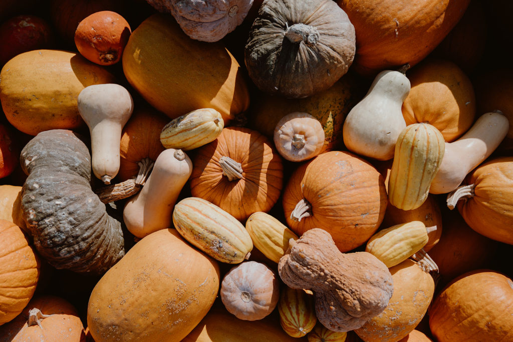 Various kinds of winter squash in a pile.