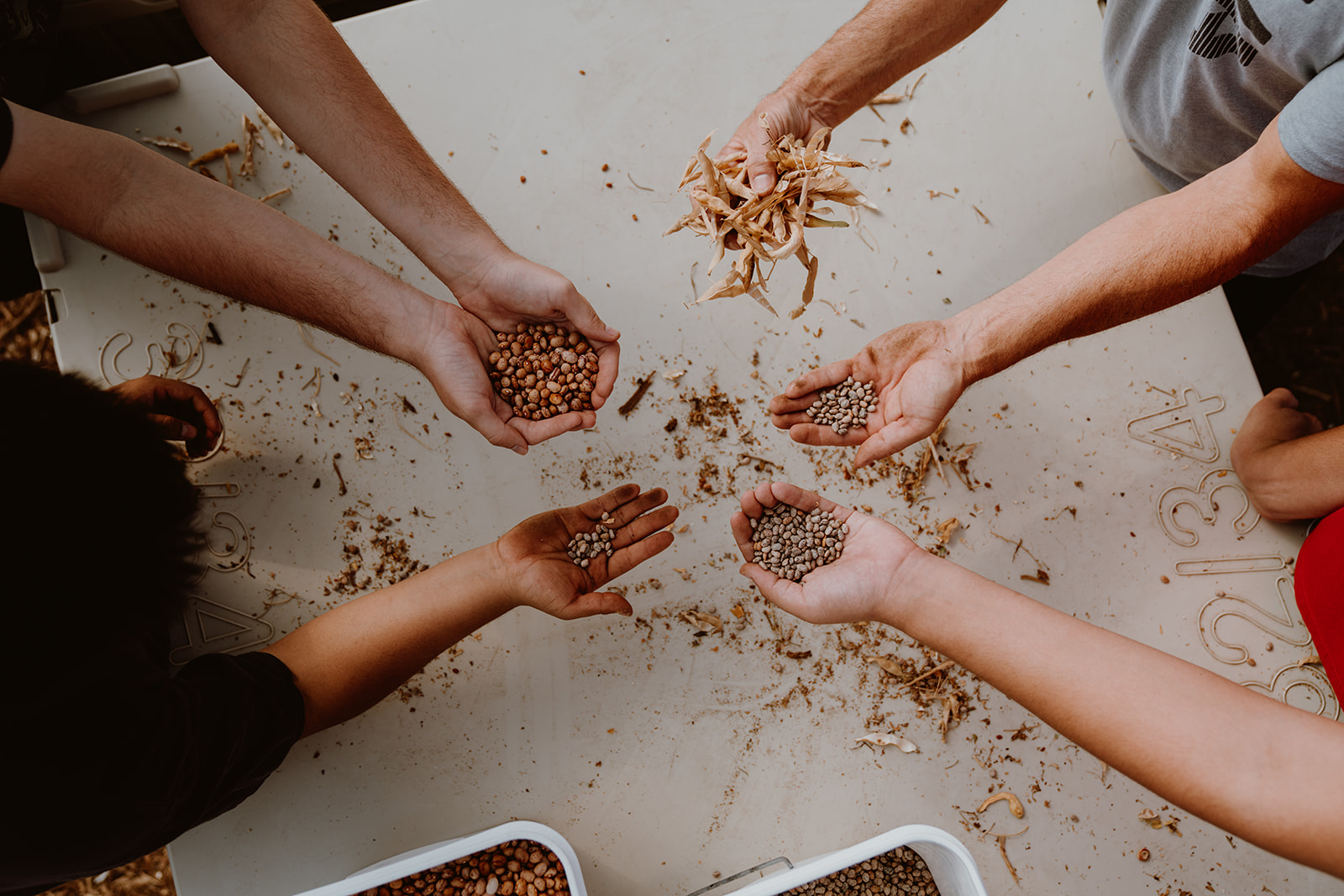Hands holding seeds in a circle.